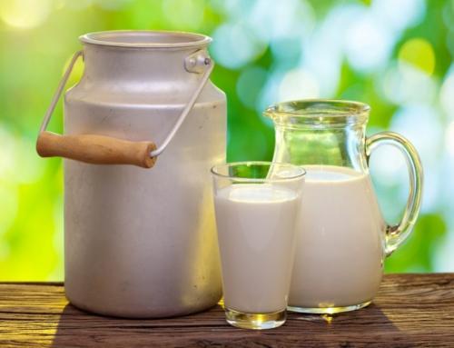 Afinal, leite faz bem ou mal?
